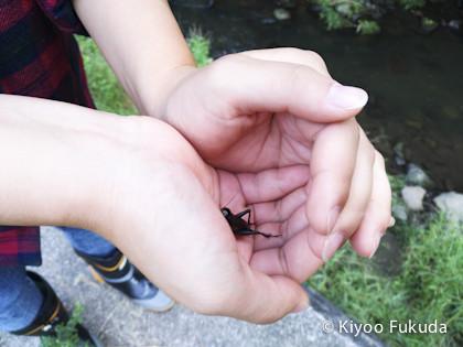 yatsugatake1709_30