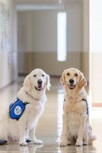 facility_dog1710_01